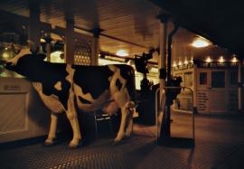 A Bull, Brighton Pier