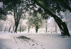 Cardiff in the Snow