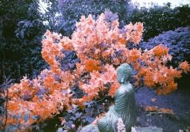 The Buddha of Maesycrugiau