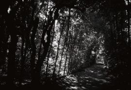 Ragnaie (spiders lane), Boboli Gardens, Florence