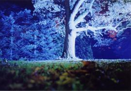 Nighttime photo of a tree uplit in blue light